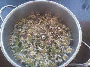 Gänseblümchensirup-Honig