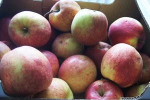 Welches Obst-Gemüse hat im September Saison ?